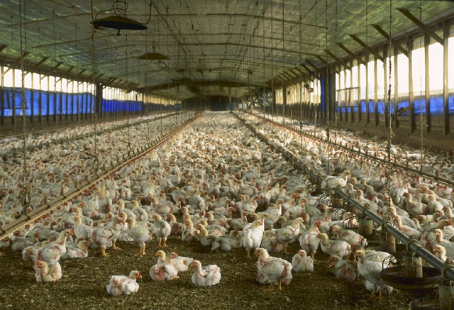 """This image or file is a work of a United States Department of Agriculture employee, taken or made as part of that person's official duties. As a work of the U.S. federal government, the image is in the public domain"""